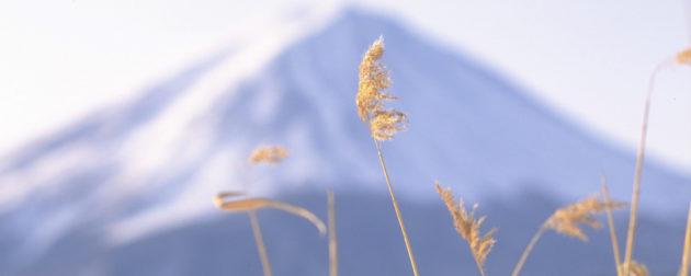 日本の松の内・お正月の富士